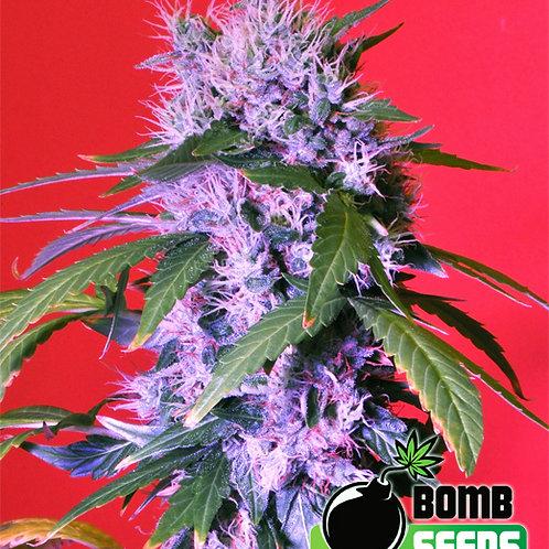 Berry Bomb AUTO Feminised Seeds