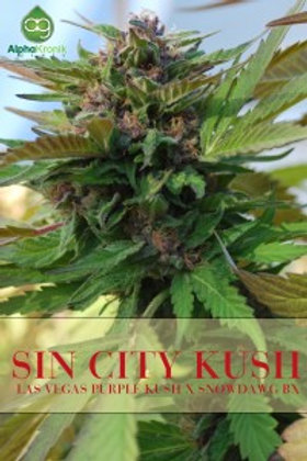 Sin City Kush 2 Regular Seeds