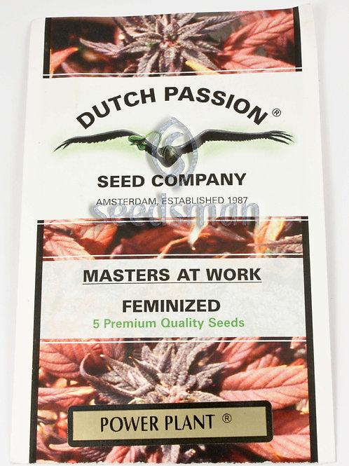 Power Plant Feminised Seeds
