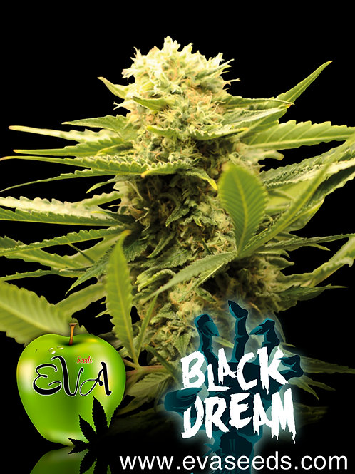 Black Dream Feminised Seeds