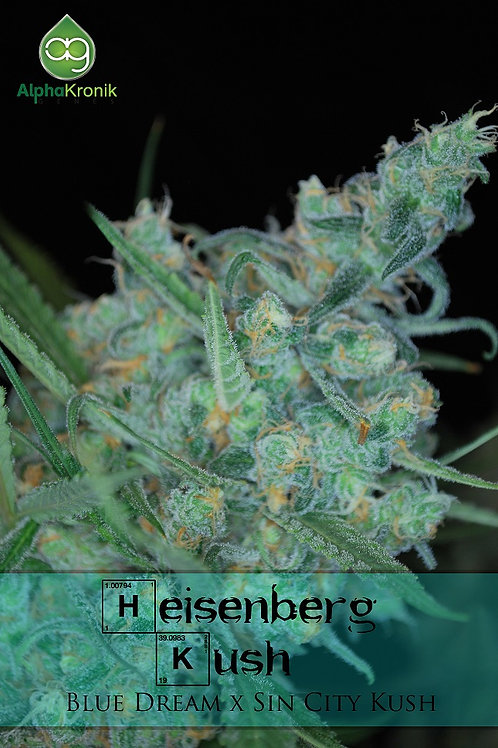 Heisenberg Kush Regular Seeds