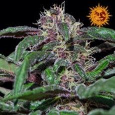 Ayahuasca Purple Feminised Seed