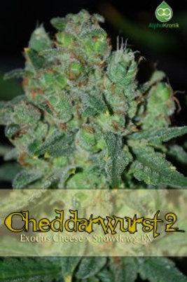 Cheddarwurst 2 Regular Seeds