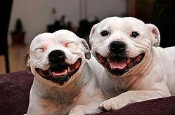 white-pitties-smilingfb.jpg