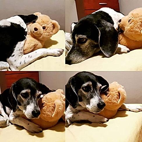 Lucky with his Teddy Bear._edited.jpg