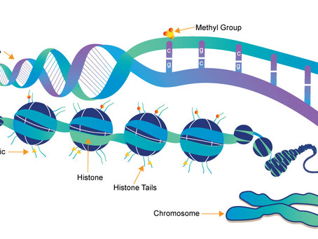 How epigenetics fits into a gene-based practice approach