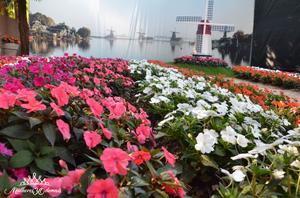Um Passeio Pela Cidade Das Flores
