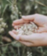 oats-3717095_1920.jpg