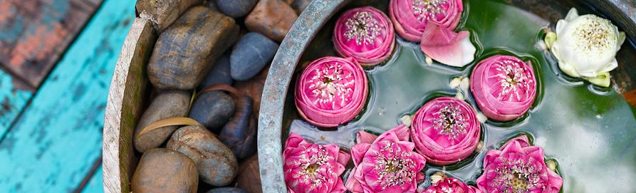 Lotus flowers.png