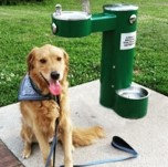 Sponsor a people and dog water station