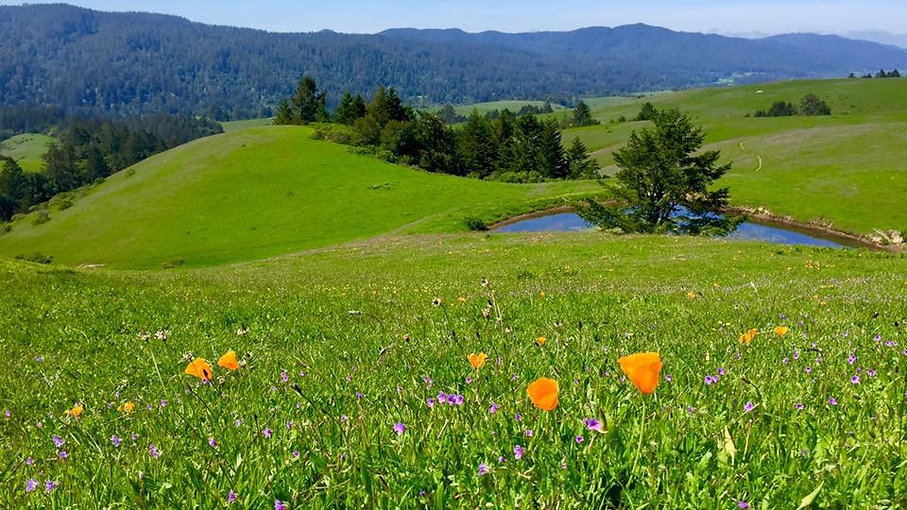 green field with poppies.JPG
