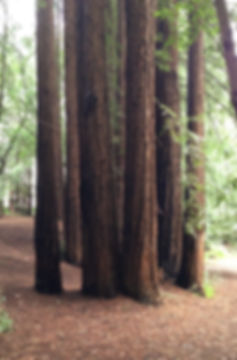 IMG_0092_edited_edited.jpg