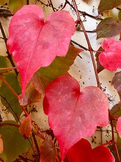 leaves- heart-shaped leaves.jpg