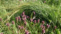 Ende April/Anfang Mai steht das Safrangras überlang