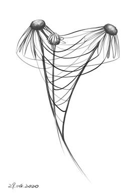 Daisy_Web.jpg