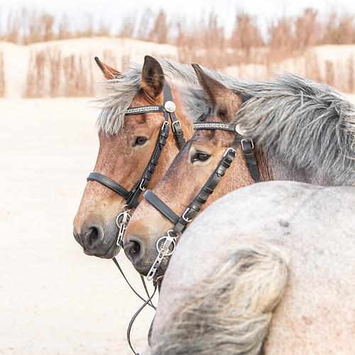 Eline & trekpaarden