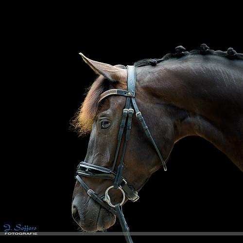 Blackfoto's Paarden