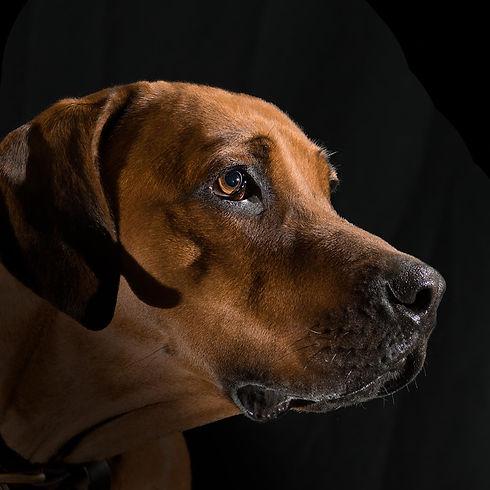 hond vierkant-4.jpg