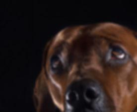 hond-1.jpg