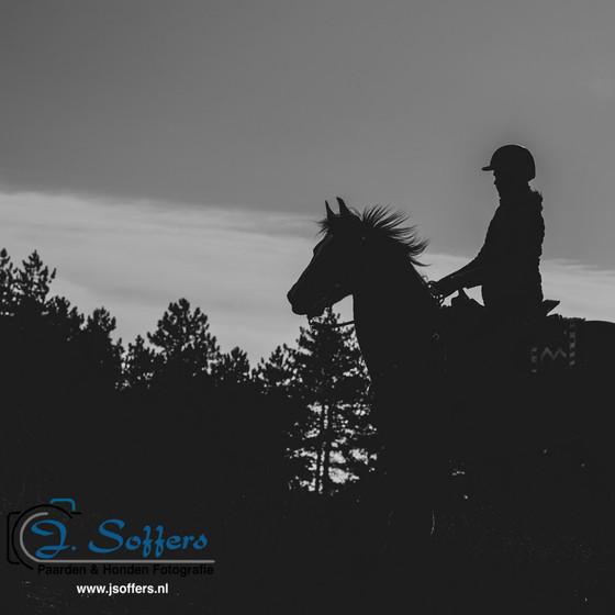 Actie Paarden fotoshoot op de heide