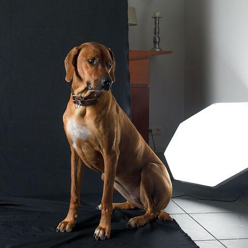 hond vierkant-6.jpg