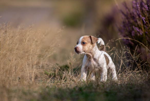 honden-8284.jpg