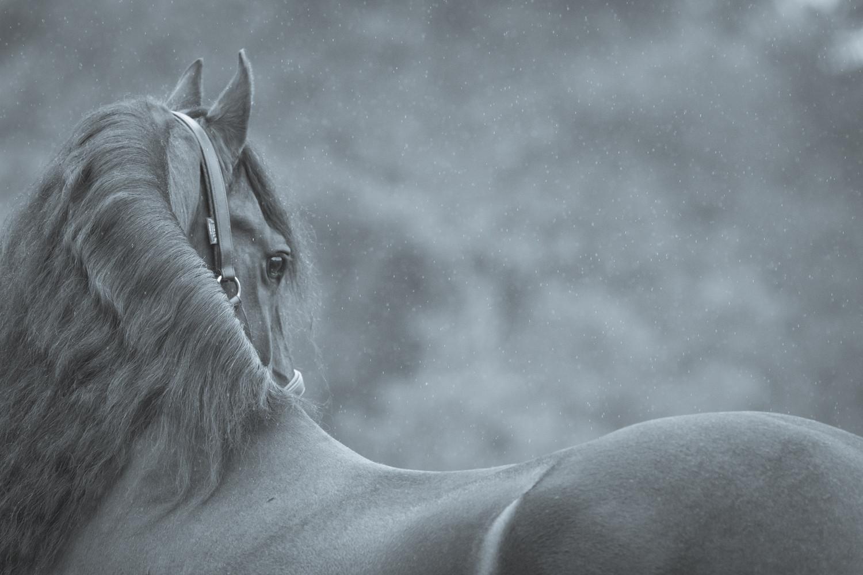 Wallart paarden fotoshoot