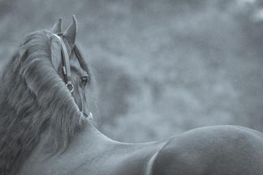 fotoshoot-paard-hond-4176.jpg