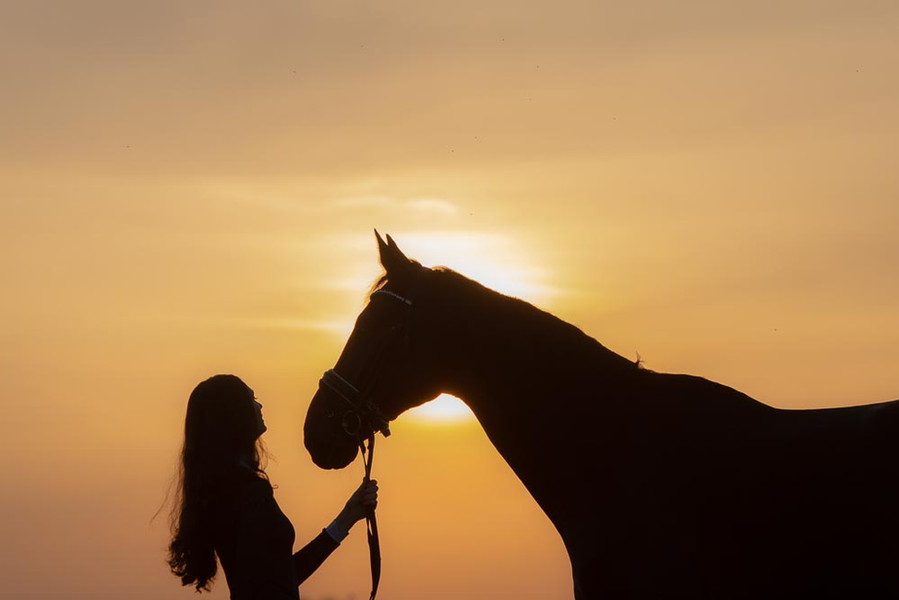Paardenfotoshoot, fotoshoot paard