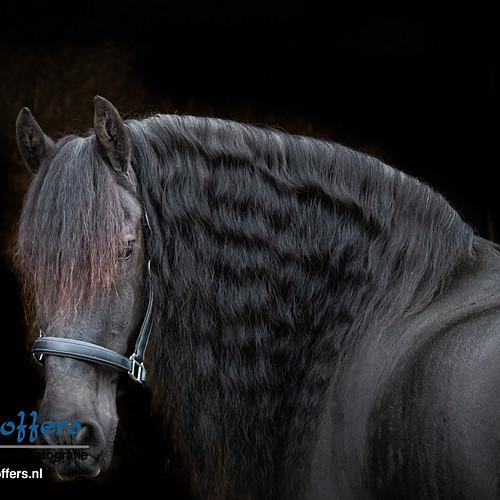 Fotoshoot Paard - Fedde