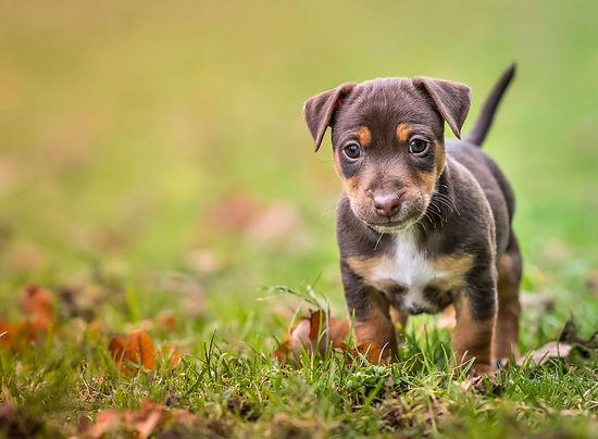 hond outdoor-5.jpg
