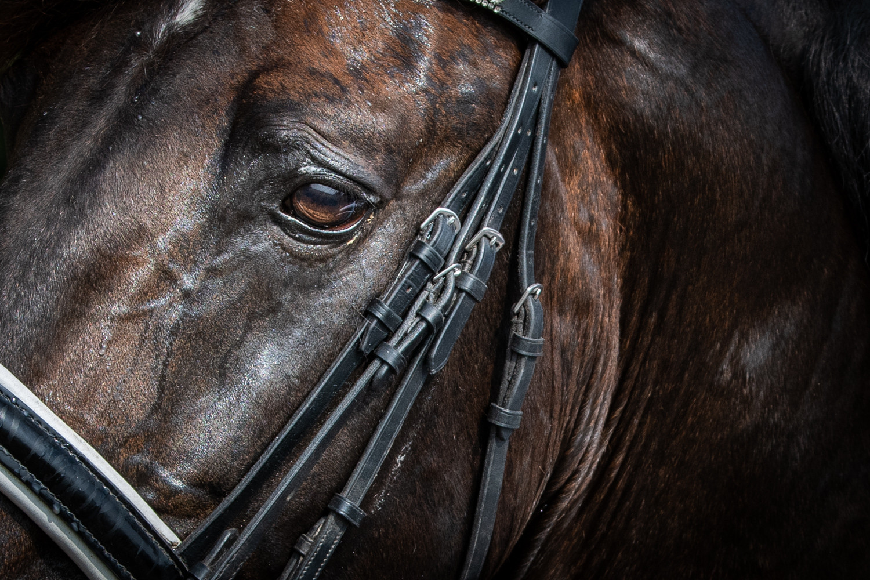 Details fotoshoot paard