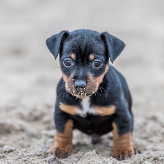 Puppy's, altijd leuk