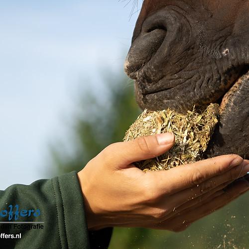 Horsemolen