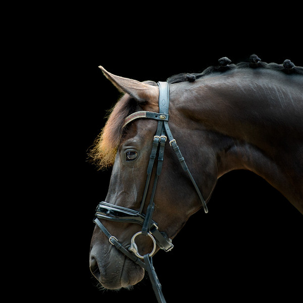 Blackfoto paard