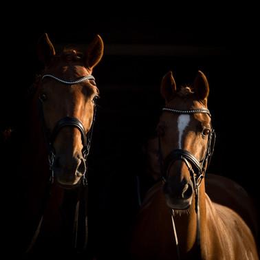 dubbel portret paard-2.jpg