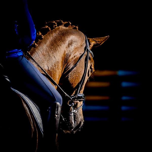 blackfoto paardenfotografie