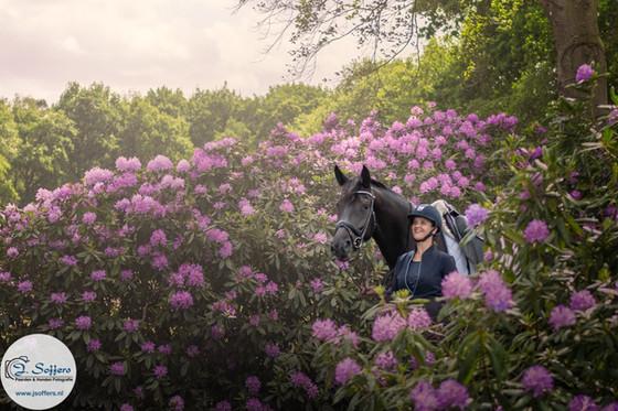 Rhododendrons & paarden & Fotoshoot