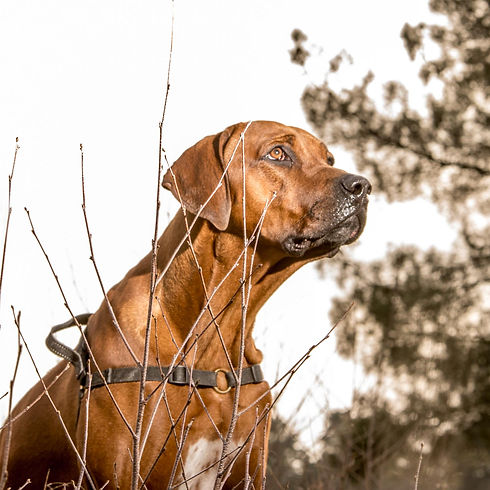 hond outdoor-1.jpg