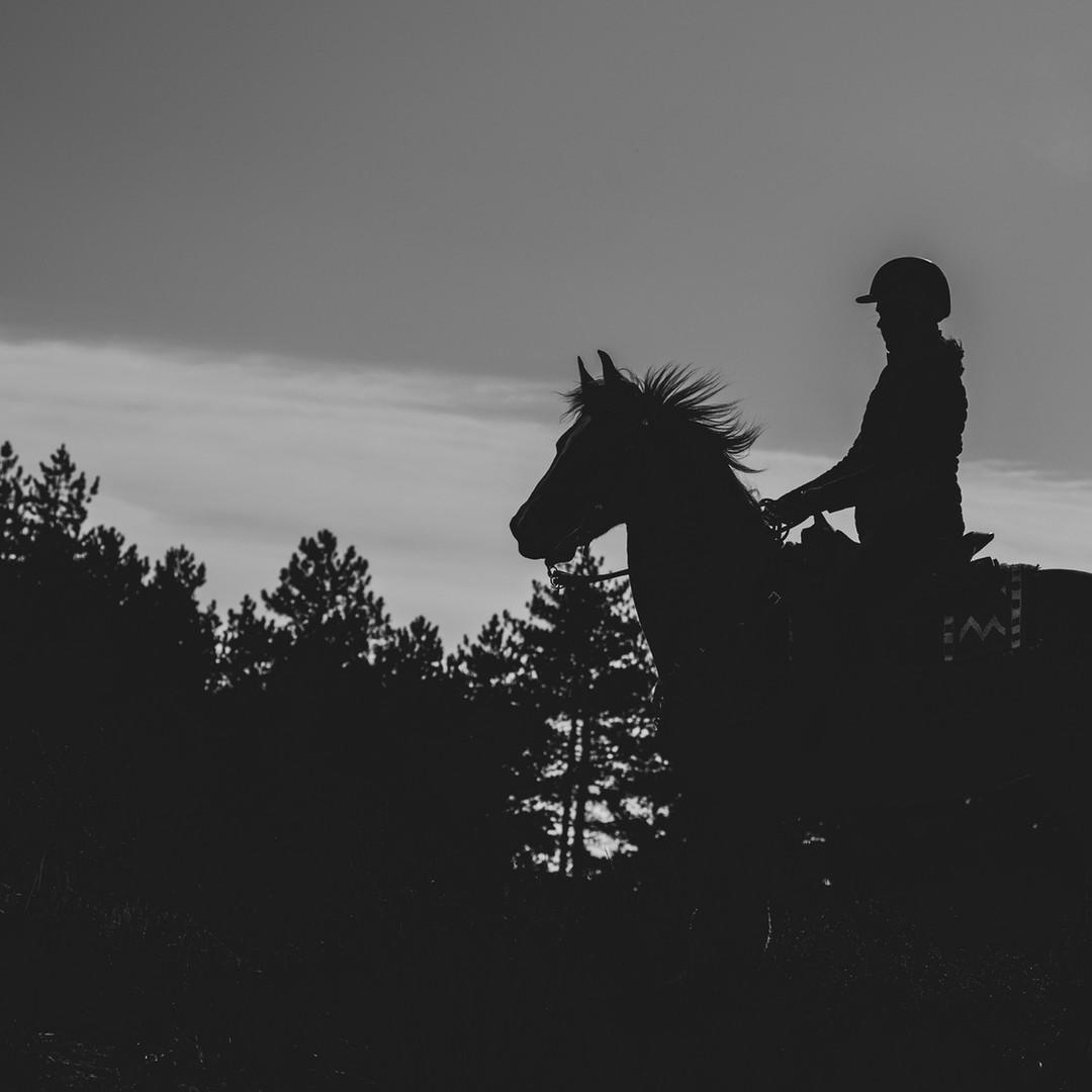 Paarden fotoshoot door Paardenfotograaf J.Soffers Fotografie
