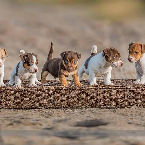 BCT Puppy shoot