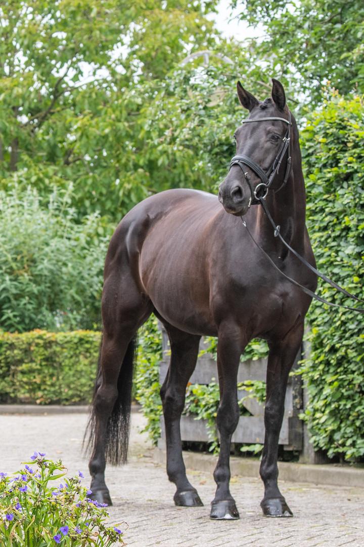 paarden fotoshoot standfoto