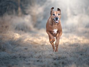 honden--3.jpg