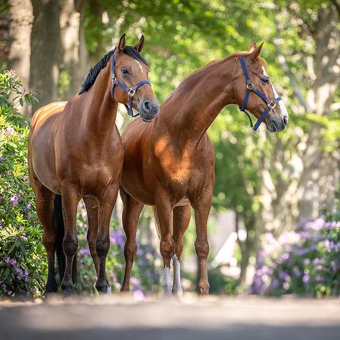 dubbel portret paard--2.jpg