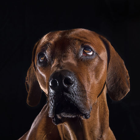 hond vierkant-1.jpg
