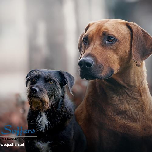 Fotoshoot hond - Jambo & Chicco
