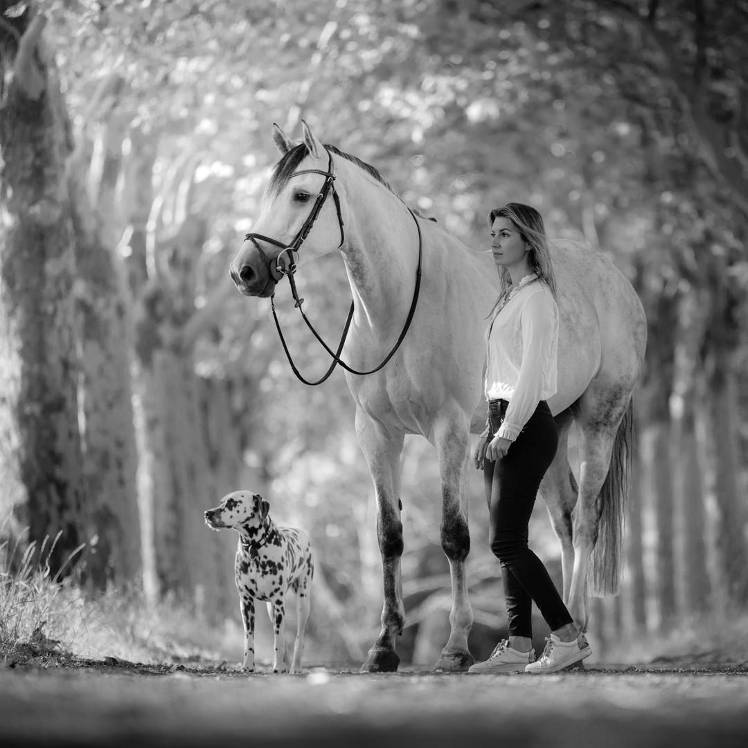 Fotoshoot paard en hond