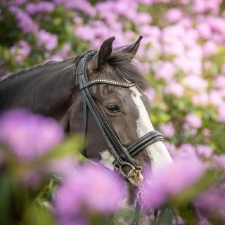 Paarden fotograaf