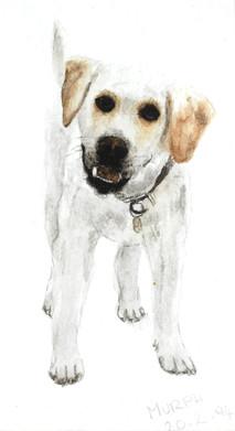 Watercolour - vet school
