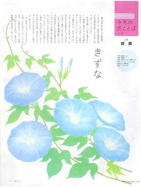 カード会員紙(月刊) 2011年4月〜2012年3月 連載 今月の花言葉 花イラスト 7月  朝顔
